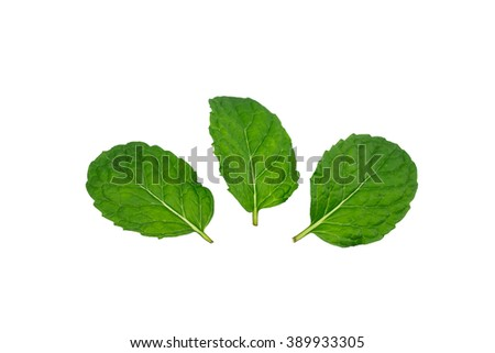 Mint leaf isolated
