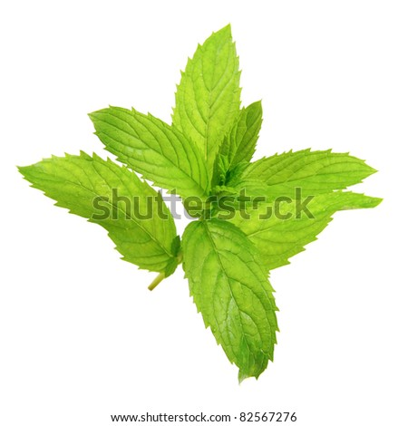 mint leaf isolated on white background - stock photo