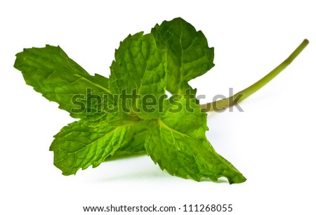 Mint leaves. green mint leaves blooming - stock photo