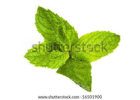 mint leaves isolated against white background - stock photo