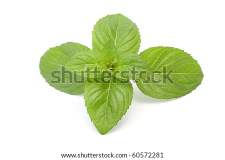 mint leaves isolated on white