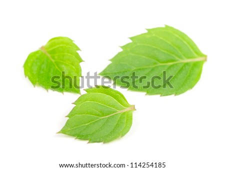Mint Leaves Isolated on White Background - stock photo