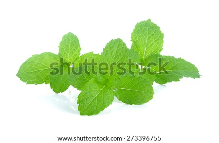 mint leaves isolated on white background. - stock photo