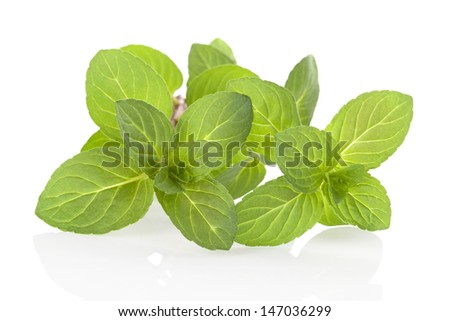 Mint leaves isolated on white background with reflection. Aromatic herbs, culinary cooking. Healthy living.