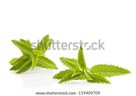 Mint leaves isolated on white in fresh, vibrant green