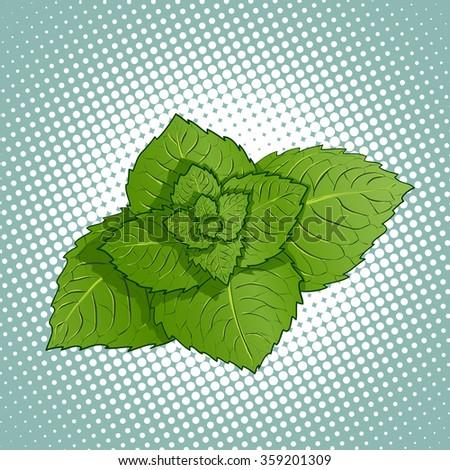 Mint leaves. Medicinal plant. Stock illustration. - stock photo