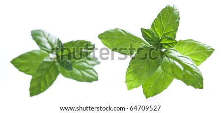 mint leaves on a seamless white background - stock photo