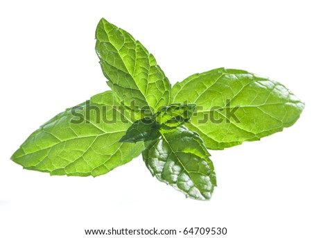 mint leaves on a seamless white background