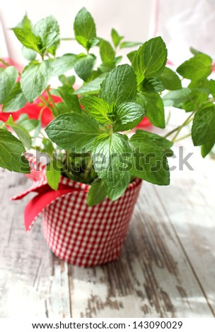 Mint leaves on wooden boards - stock photo