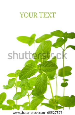 Mint on a white background - stock photo