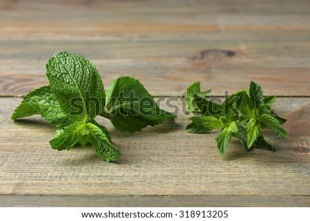 mint on light green background - stock photo