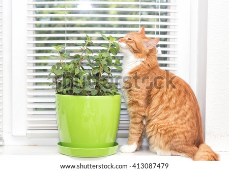 mint plant and cat,  - stock photo