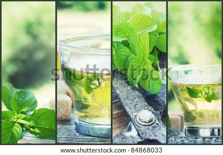 Mint tea collage. Freshly cut mint from the herb garden with mint tea and cubes of sugar - stock photo