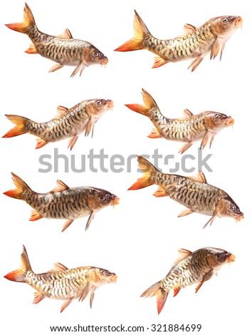 Mirror fish carp - stock photo