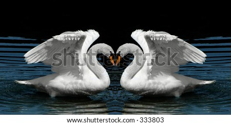 Mirror image of swans to form a heart