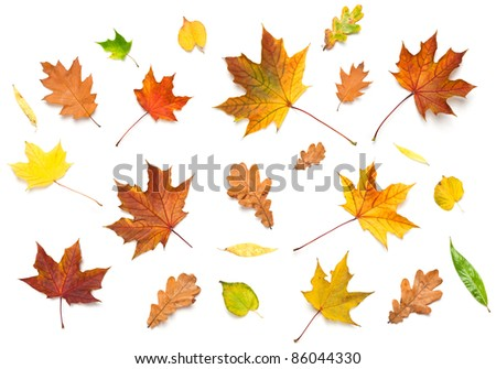 Miscellaneous fall leaves (maple, oak, linden and white willow), isolated on white.