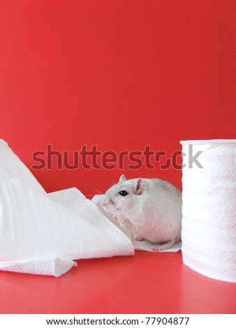 Mischievous White and Gray Pet Gerbil with Toilet Paper on Red Background with Copy Space - stock photo