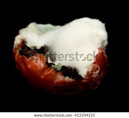 missing rotten tomato on a black background - stock photo
