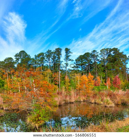 Mississippi swamp in fall along the Natchez Trace Parkway. - stock photo
