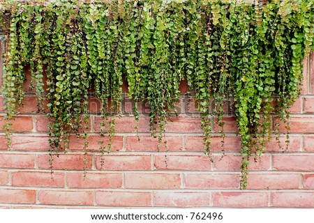 missouri botanical gardens brick wall with plant