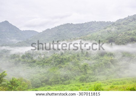 Mist at national forest - stock photo