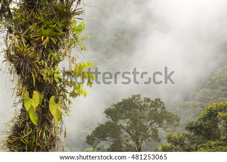 Mist blowing over rainforest covered mountain slopes in the Rio Quijos Valley in the Ecuadorian Amazon. Foreground tree with large leaved Philodendron vines.