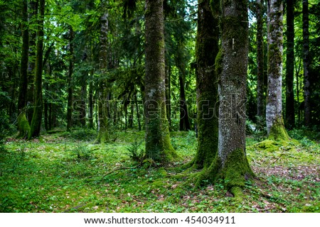 mist forest with moss trees - stock photo