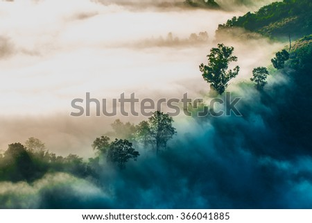Mist. Forested mountain slope in low lying cloud with the evergreen conifers shrouded in mist in a scenic landscape view. morning. - stock photo