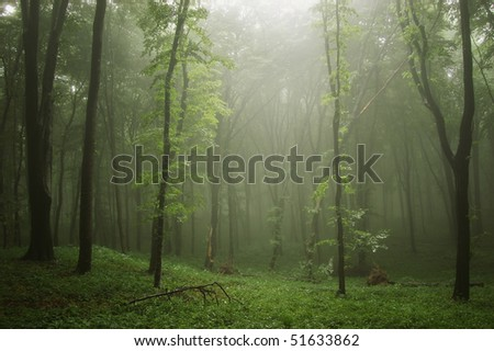mist in a green forest