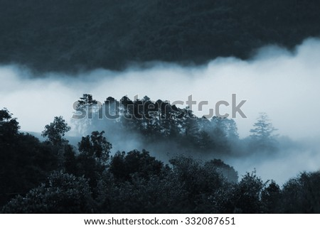mist in deep pine forest in morning, landscape of mountain hill mist layer and tree ,winter natural waves of fog, Fog flow at tropical rain forest and mountain landscape, Chiang Mai, Thailand - stock photo