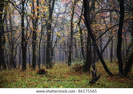 Mist in the autumn forest - stock photo