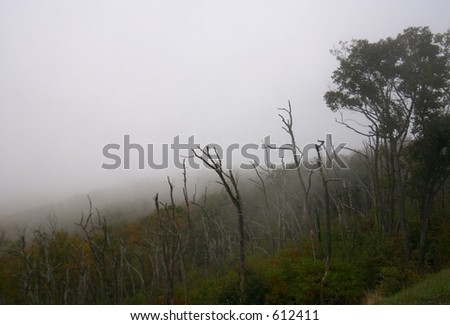 Mist in the mountain - stock photo