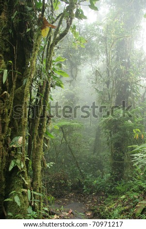 Mist Rising in the Monteverde Cloud Forest Nature Preserve - Santa Elena, Costa Rica - stock photo