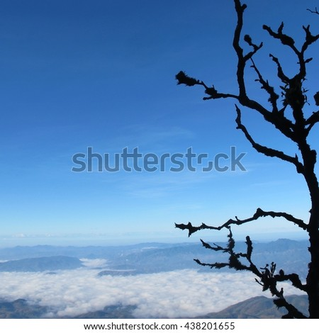 Mist , wild forest in the sunrise misty fog and low lying clouds. View in morning from top of the mountain. - stock photo