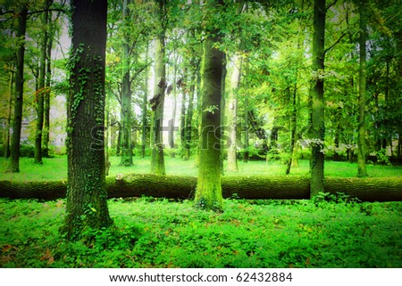Mistical forest - stock photo