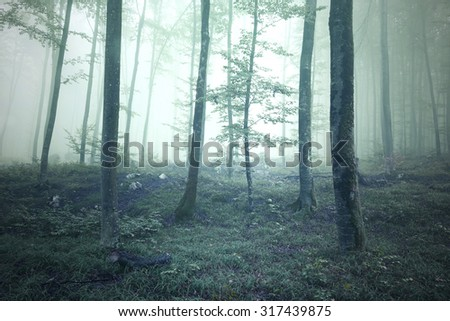 Mistical green saturated foggy forest trees landscape. Color filter effect used. Picture was taken in south east Slovenia, Europe. - stock photo