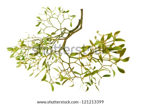 mistletoe branch with berries isolated on white