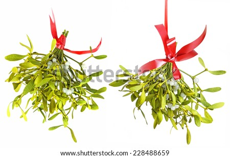 mistletoe isolated on a white background - stock photo