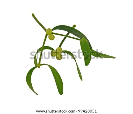 Mistletoe sprigs - stock photo