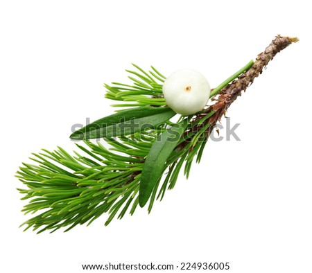 Mistletoe twig and fir tree branch christmas decoration over white background. - stock photo