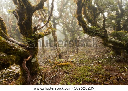 Mists in virgin mountain rainforest wilderness of Marlborough, New Zealand - stock photo