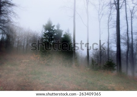 Misty and hazy forest in the polish mountains. Beskids, Poland. - stock photo