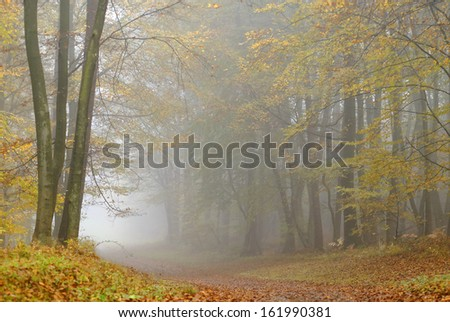 misty atmosphere in the forest,during fall season - stock photo