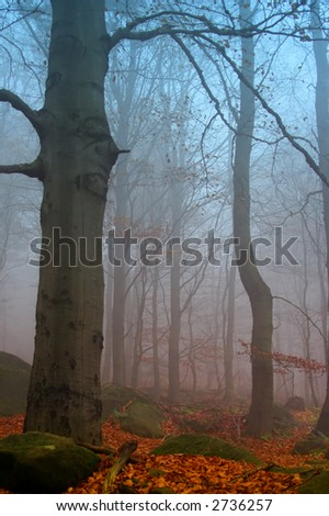Misty autumn beechwood, ground covered by fallen leaves - stock photo