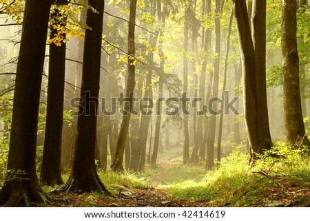 Misty autumn footpath leading through the forest on top of the mountain. - stock photo