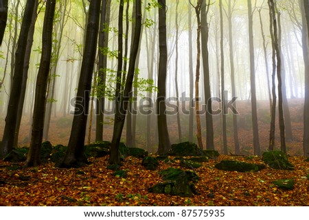Misty autumn forest, the mountains.