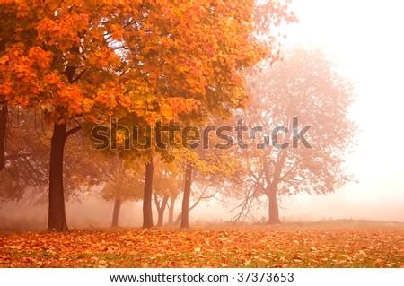 Misty autumn morning - stock photo
