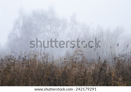 Misty autumn morning on the shore of the pond - stock photo