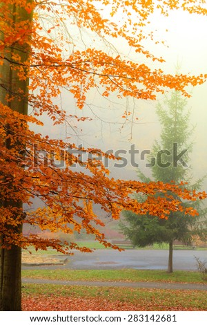 misty autumn park on foggy day. Autumnal scenery, beauty landscape. Fall trees and leaves. - stock photo
