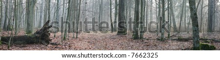 Misty autumnal forest at morning with soft light of sun